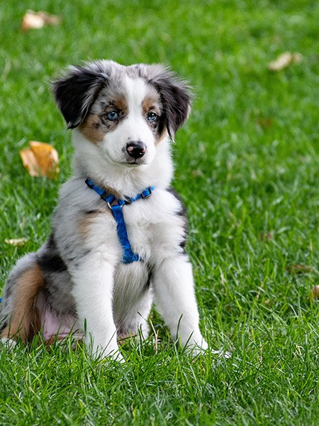 Puppy in the yard