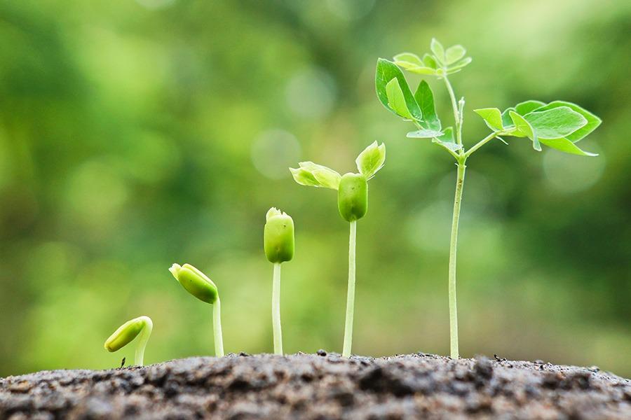 Growing Plant-seedling