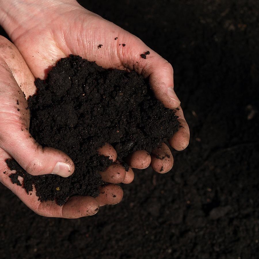 Soil Bioavailability