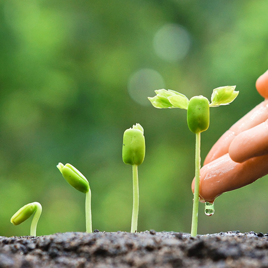 Soil Recovery - Phosphorus